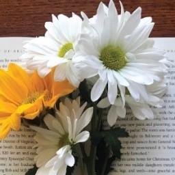 Indie Bookstore Celebrations & Trivia